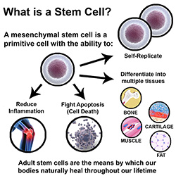 what is stem cell